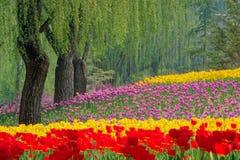Tulip Garden royalty-vrije stock fotografie
