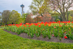 Tulip garden in front of Skylon tower. In Niagara Falls, Canada stock photos