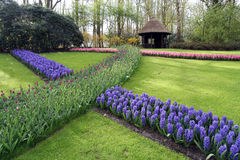 Tulip garden with gazebo stock photos