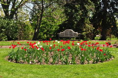 Tulip Garden. Image of a garden of multicolor tulips royalty free stock images