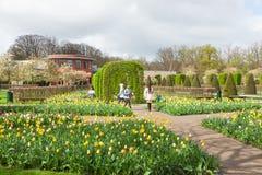 Tulip Garden Keukenhof, Lisse, Netherlands Royalty Free Stock Images
