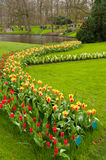 Tulip garden in Keukenhof, Netherlands Stock Photography