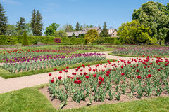 Tulip garden. Large garden full of Tulips near Niagara Falls, Canada royalty free stock photos