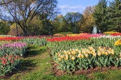Tulip Garden Netherlands Carillon Arlington Virginia stock fotografie