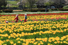 Tulip garden with  at Oita Japan. Tulip field in April, landscape of tulip festival Stock Image