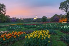 Tulip Garden Overlooking Washington DC royalty free stock image