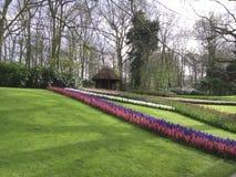 Tulip. Garden park kokhenhof Tree Stock Photography