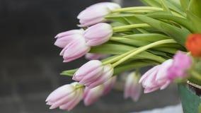 Tulip in the garden Stock Image
