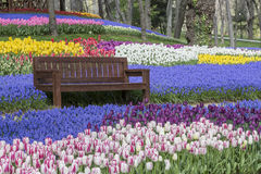 Tulip Gardens in Istanbul, Turkey. Tulips and park bench, in Istanbul, Turkey stock photos