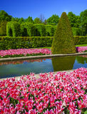Tulip gardens in the Keukenhof. Stock Image