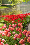 Tulip gardens and lake Royalty Free Stock Photos
