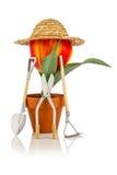 Tulip gardner Stock Image