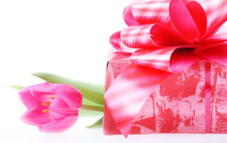 Tulip and gift box. Royalty Free Stock Image