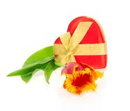 Tulip, the gift box of heart Royalty Free Stock Images