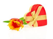 Tulip, the gift box of heart Royalty Free Stock Photos