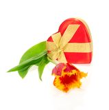 Tulip, the gift box of heart. Isolated on white Stock Images