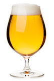 Tulip glass of lager beer isolated Stock Photos