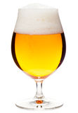Tulip glass of pilsner beer with head. Full snifter glass of pale lager of pilsner beer with a large head of foam  on white background Stock Images