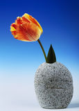 Tulip In Granite. Beautiful red and yellow tulip graces a stone granite vase Stock Photography