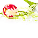 Tulip and green beads. Stock Images