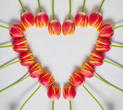Tulip Heart Royalty Free Stock Image