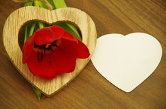 Tulip heart and a note Royalty Free Stock Photos