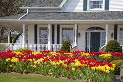 Free Tulip House Royalty Free Stock Image - 16675896