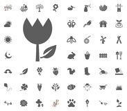 Tulip icon. Spring vector illustration icon set. vector illustration