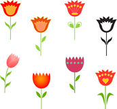 Tulip Illustrations, Flowers Illustrations. Flower illustrations, red tulip, pink tulip, green leaves, black tulip, black and white flower, yellow flower Royalty Free Stock Photography