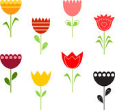 Tulip Illustrations. With green leaves, red tulip, yellow tulip, pink tulip, black tulip, plants, nature, flora Stock Images