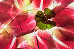 Tulip Leaves Royalty Free Stock Photos