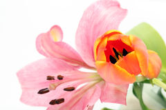 Tulip and lily flowers Royalty Free Stock Photography