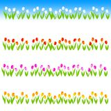 Tulip Line / divider Stock Images