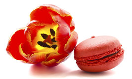 Tulip with macaroon Stock Photography