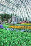 Tulip Mania trädgårdar vid fjärden Arkivfoton