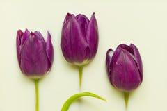 Tulip in milk Royalty Free Stock Photo
