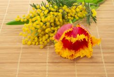 Tulip, mimosa on the bamboo cloth Stock Photos