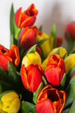 Tulip mix Royalty Free Stock Photography