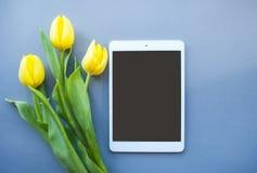 Tulip?n amarillo en fondo en colores pastel imágenes de archivo libres de regalías