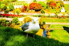 Tulip?n muy bonito y hermoso como una campana en el primero plano fotografía de archivo libre de regalías