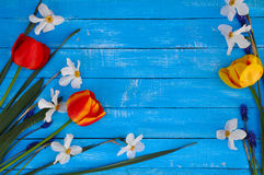 Tulip, narcissus on a blue wooden background Stock Photos