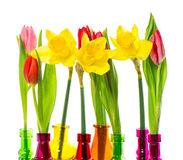 Tulip and narcissus flowers in colorful vases Royalty Free Stock Photography