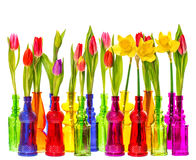 Tulip and narcissus flowers in colorful vases Royalty Free Stock Images