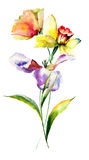 Tulip and Narcissus flowers Stock Image