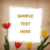 Tulip and old paper for text and background Stock Photography