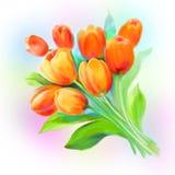 Tulip orange flowers spring painting stock photos