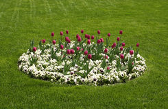 Tulip and pansies flowers arrangement royalty free stock photo