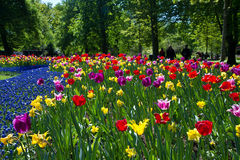 Tulip park Royalty Free Stock Image