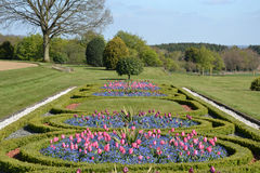 Tulip parterre Royalty Free Stock Photography