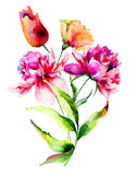 Tulip and Peony flowers Royalty Free Stock Photo